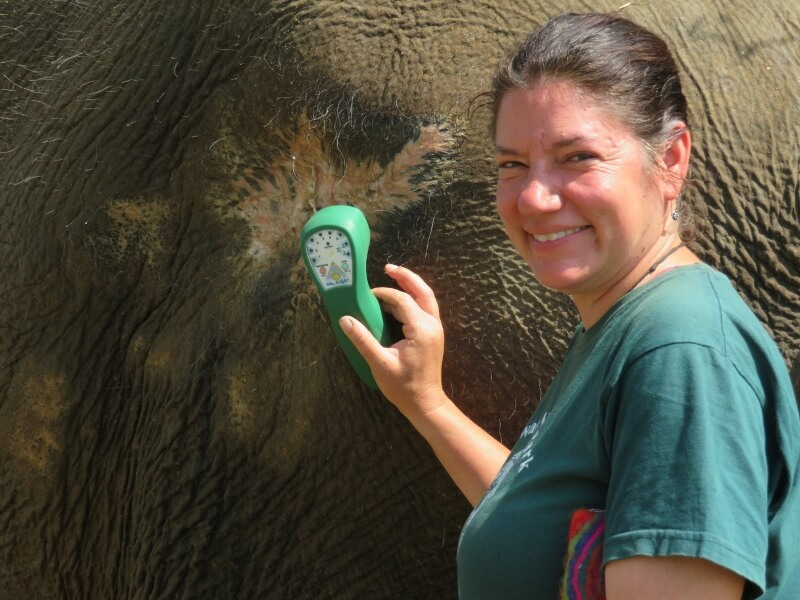 Trish London, DVM using Multi Radiance Super Pulsed Laser on the last remnants of the elephant wound